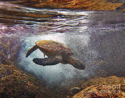 Hawaiian Green Sea Turtle Photograph - Honu Dives Under by Bette Phelan