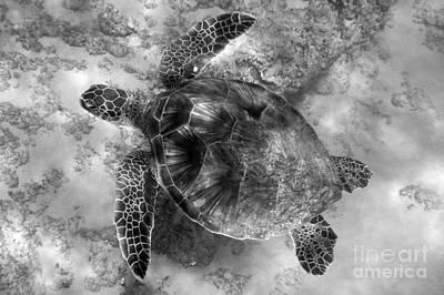 Green Sea Turtle Photograph - Honu Gliding by Jackson Kowalski