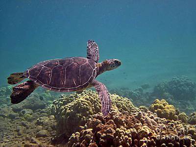 Photograph - Honu Heaven by Bette Phelan