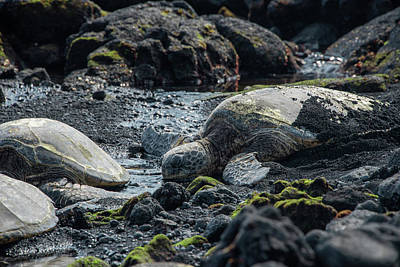 Photograph - Honu by Jennifer Ancker