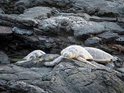 Photograph - Honu Or  Hawaiian Green Sea Turtles by Mary Lee Dereske
