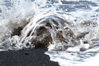 Honu Photograph - Honu Punalu'u by Fathom It Studios