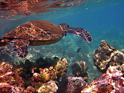 Hawaiian Green Sea Turtle Photograph - Honu Reflections by Bette Phelan