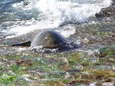 Laniakea Beach Photograph - Honu Waverider by Grant Wiscour