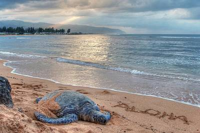 Photograph - Honu Welcome by Jeff Cook