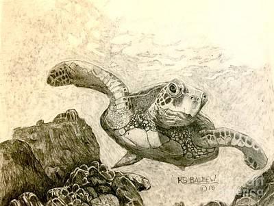 Sea Turtle Drawings