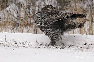 Photograph - Hoo Are Yoo by Larry Ricker
