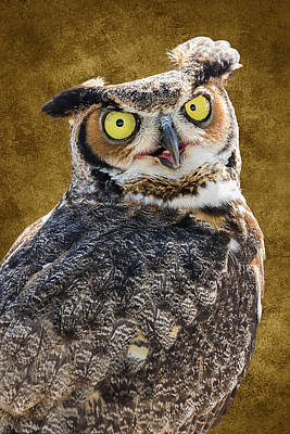 Photograph - Hoo-hoo-hoo Are You by Dawn Currie