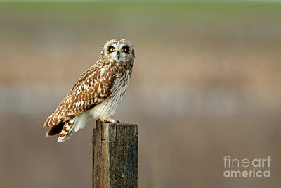 Photograph - Hoo Hoo Looking At You by Beve Brown-Clark Photography