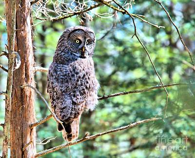 Photograph - Hoo Who Goes There by Debbie Stahre