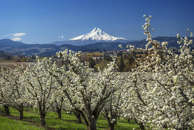 Photograph - Hood River Valley In Bloom by Jon Ares