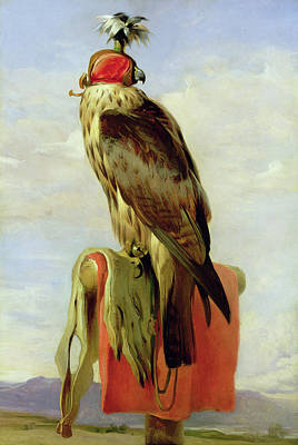 Landseer Painting - Hooded Falcon by Sir Edwin Henry Landseer