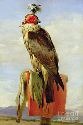 Falconry Painting - Hooded Falcon by Sir Edwin Landseer
