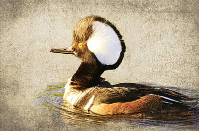 Photograph - Hooded Merganser by Steve McKinzie