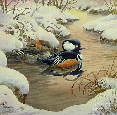 Harle Wall Art - Painting - Hooded Mergansers On A Pool by Carl Donner