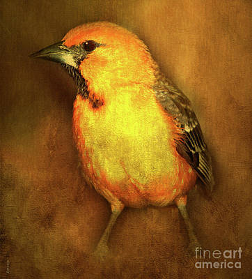 Oriole Mixed Media - Hooded Oriole by KaFra Art