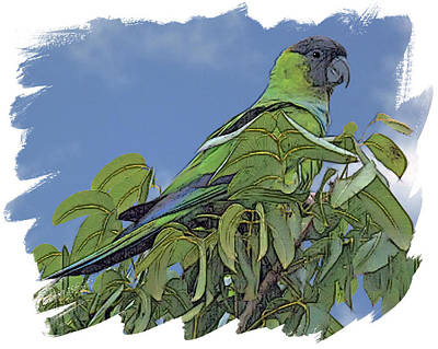 Parakeet Digital Art - Hooded Parakeet by Larry Linton