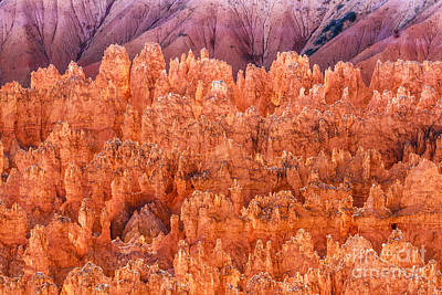 Photograph - Hoodoos On Fire At Bryce by Ben Graham