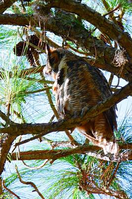 Photograph - Hoot Is Down There? by Lisa Wooten