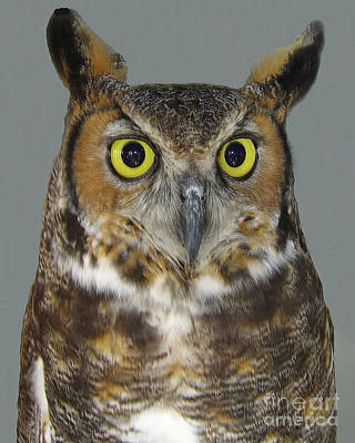 Art Print featuring the photograph Hoot-owl - I'm Looking At You by Merton Allen