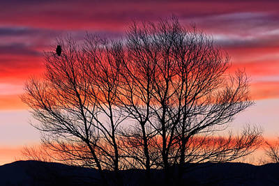 Photograph - Hoot Owl Sundown by Kathleen Bishop