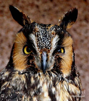 Photograph - Hoots On First - Portrait Of A Flirtatious Owl by Christine S Zipps