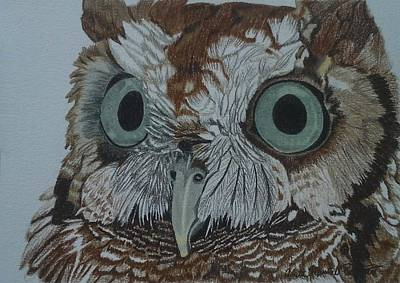 Drawing - Hooty Who? - Screech Owl Detail by Anita Putman