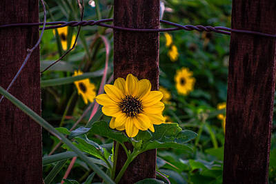 Photograph - Hope Blooms by Lawrence S Richardson Jr