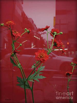 Photograph - Hope by Eena Bo