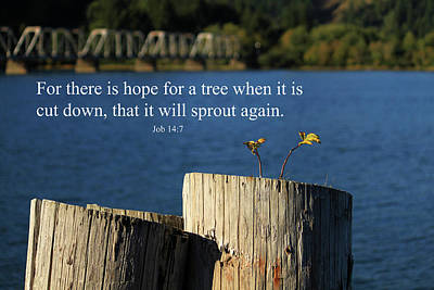 Photograph - Hope For A Tree by James Eddy