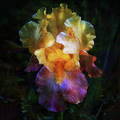 Hope Iris Original