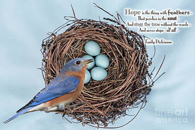 Photograph - Hope Is The Thing With Feathers by Bonnie Barry