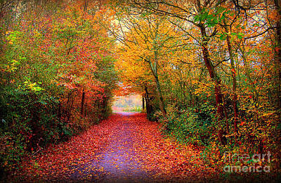 Autumn Woods Photograph - Hope by Jacky Gerritsen