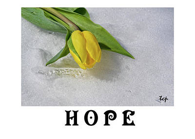 Photograph - Hope by Traci Cottingham