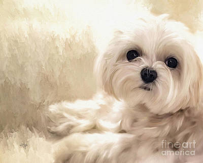 Maltese Digital Art - Hoping For A Cookie by Lois Bryan
