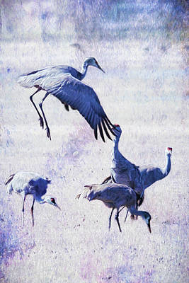 Photograph - Hopping Crane by Belinda Greb