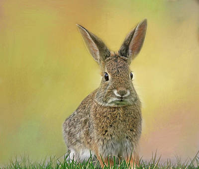 Photograph - Hoppy Spring by Donna Kennedy