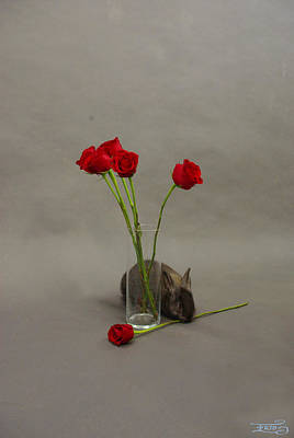 Photograph - Hoppy Valentine's Day 1 by Alana  Schmitt