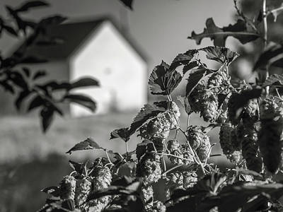 Photograph - Hops And House by Mark Mille