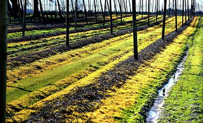 Photograph - Hops Lines by Jerry Sodorff