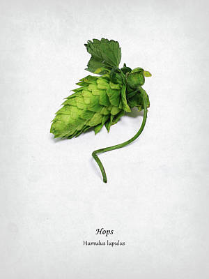 Hop Photograph - Hops by Mark Rogan