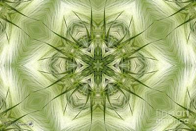Digital Art - Hordeum Jubatum Kaleidoscope by J McCombie