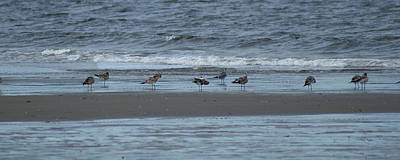 Photograph - Horizontal Shoreline With Birds by Margie Avellino