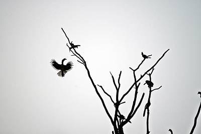 Hornbill Original by Ansie Martin