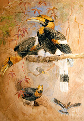 Hornbill Wall Art - Painting - Hornbill  by Joseph Wolf