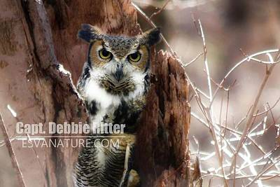 Photograph - Horned Owl 9193 by Captain Debbie Ritter