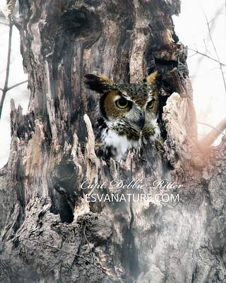 Photograph - Horned Owl 9988 by Captain Debbie Ritter