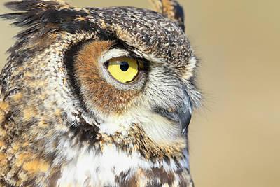 Photograph - Horned Owl Close Up by Steve McKinzie