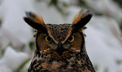 Photograph - Horned Owl by Jewels Blake Hamrick