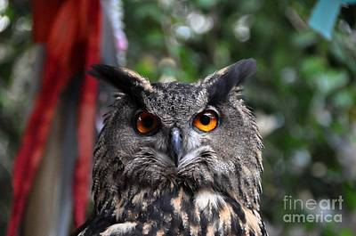 Photograph - Horned Owl by John Black